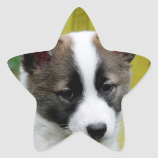 Icelandic Sheepdog 2014-0806 Star Sticker