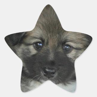 Icelandic Sheepdog 2014-0808 Star Sticker
