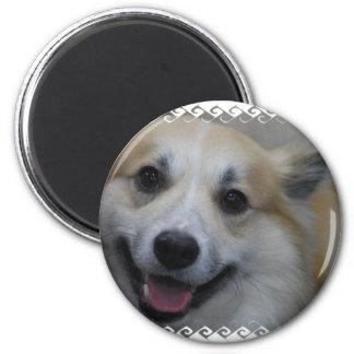 icelandic-sheepdog-2.jpg fridge magnets