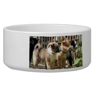Icelandic Sheepdogs Pet Food Bowls