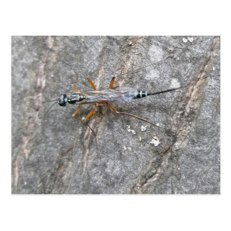 Ichneumon Fly on Log Postcard