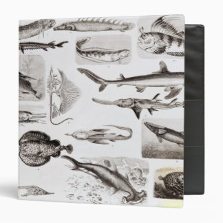 Ichthyology- Elasmobranch, Ganoid Binder