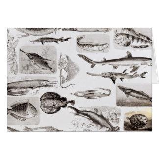 Ichthyology- Elasmobranch, Ganoid Card