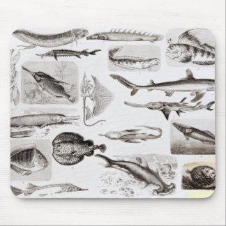 Ichthyology- Elasmobranch, Ganoid Mouse Pad