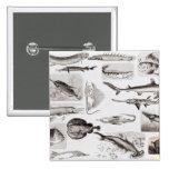 Ichthyology- Elasmobranch, Ganoid Pinback Buttons
