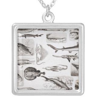 Ichthyology- Elasmobranch, Ganoid Square Pendant Necklace