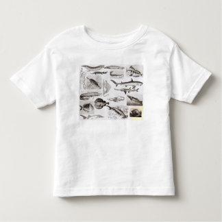 Ichthyology- Elasmobranch, Ganoid Toddler T-shirt