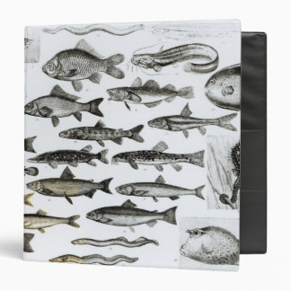 Ichthyology, Osseous Fishes, Marisipobranchs 3 Ring Binder
