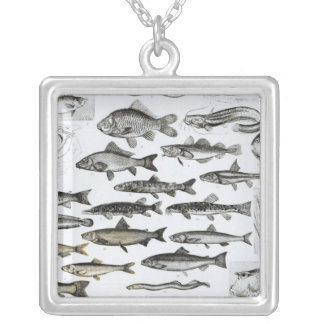 Ichthyology, Osseous Fishes, Marisipobranchs Square Pendant Necklace
