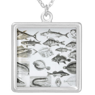 Ichthyology Osseous Fishes Square Pendant Necklace