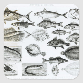 Ichthyology Osseous Fishes Square Sticker