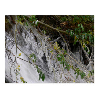 Icicles on Willow at Ouzel Falls Postcard