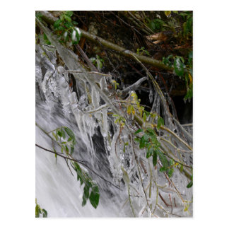 Icicles on Willow at Ouzel Falls Postcards