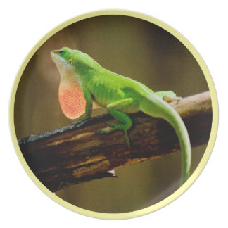 Ick, It's  A Gecko plate