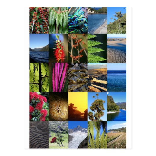 Iconic New Zealand Kiwiana nature scenes Postcard