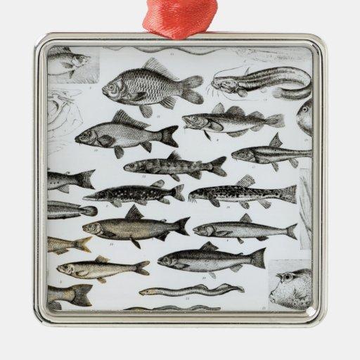 Ictiología, pescados oseos, Marisipobranchs Adornos De Navidad