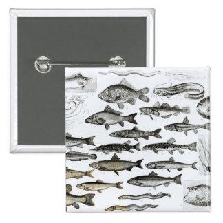 Ictiología, pescados oseos, Marisipobranchs Pins