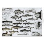 Ictiología, pescados oseos, Marisipobranchs Felicitaciones