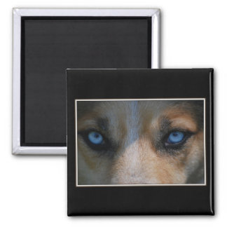 Icy Blue Canine Eyes Magnet