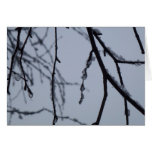 Icy Branches Abstract Winter Nature Photography Card