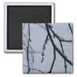 Icy Branches Abstract Winter Nature Photography Magnet