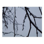 Icy Branches Abstract Winter Nature Photography Postcard