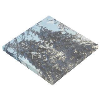 Icy Colorado Blue Spruce Gallery Wrap