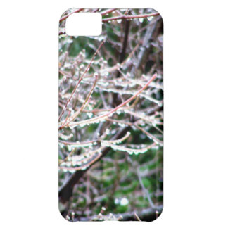 Icy Dogwood Case For iPhone 5C