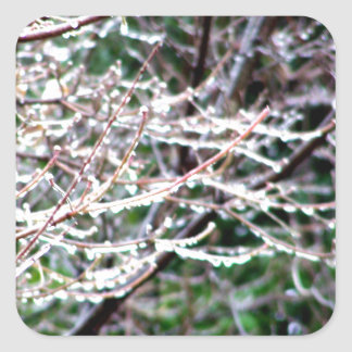 Icy Dogwood Square Sticker