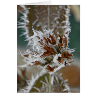 Icy Leaves Greeting Cards