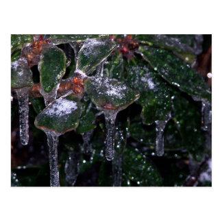 icy leaves postcard