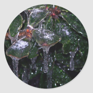 icy leaves classic round sticker
