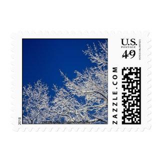 Icy Oaks US Postage