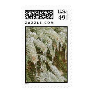 Icy Pine Needles Postage