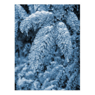 Icy Pine Post Card