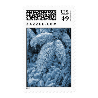 icy pine tree postage