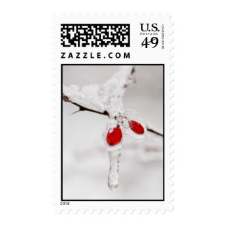 Icy Red Berries Postage
