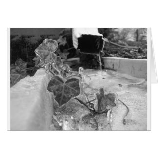 Icy Vine On Drain Pipe Greeting Cards