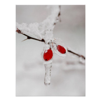Icy Winter Berries Poster