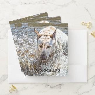 ID:  Golden Lab Splashing - Pet Photography Pocket Folder