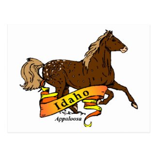 Idaho Apaloosa Postcard