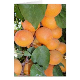 Idaho Apricots Greeting Cards