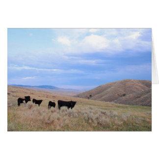 Idaho Black Angus Cattle Card