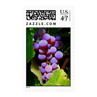 Idaho Concord Grapes Postage Stamp