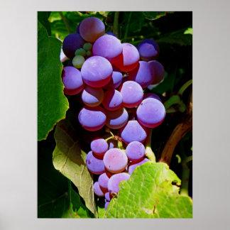 Idaho Concord Grapes Poster
