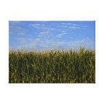 Idaho Corn Field Gallery Wrapped Canvas