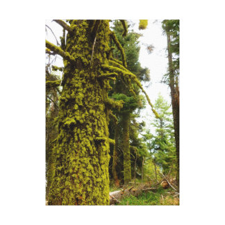 Idaho Forest Gallery Wrap Canvas