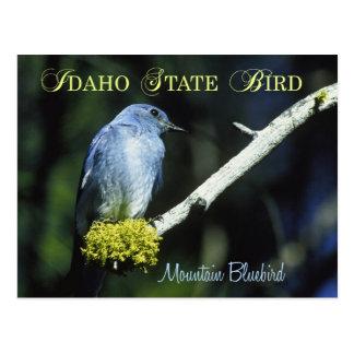 Idaho State Bird - Mountain Bluebird Postcard