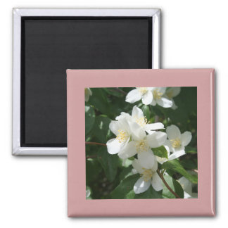 Idaho State Flower, the Syringa 2 Inch Square Magnet