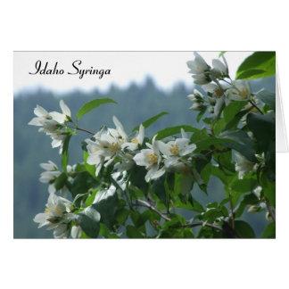 Idaho Syringa - Blank Card